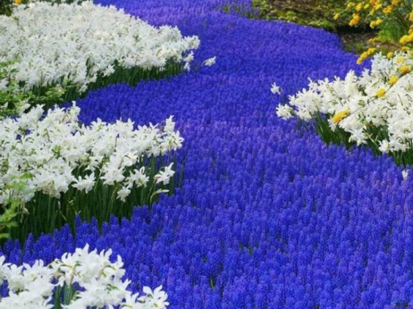 nizkoroslye-cvety-dlja-klumby-kotorye-budut-cvesti-vse-leto-9cf4e37