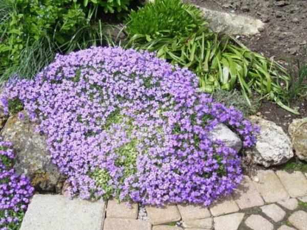 nizkoroslye-cvety-dlja-klumby-kotorye-budut-cvesti-vse-leto-9f2777d