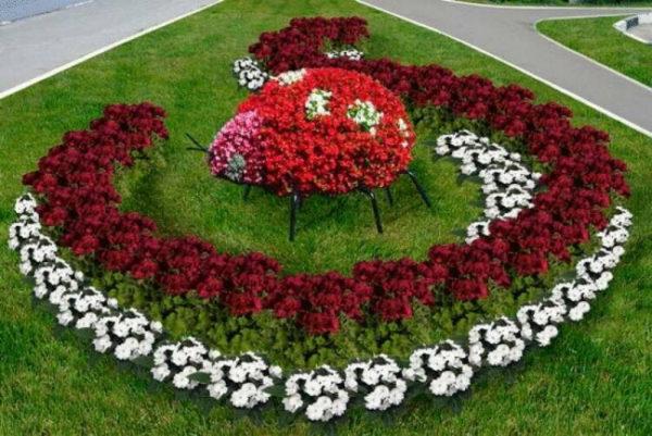 nizkoroslye-cvety-dlja-klumby-kotorye-budut-cvesti-vse-leto-a1ee2ec
