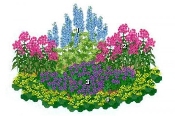 nizkoroslye-cvety-dlja-klumby-kotorye-budut-cvesti-vse-leto-d11cbdb
