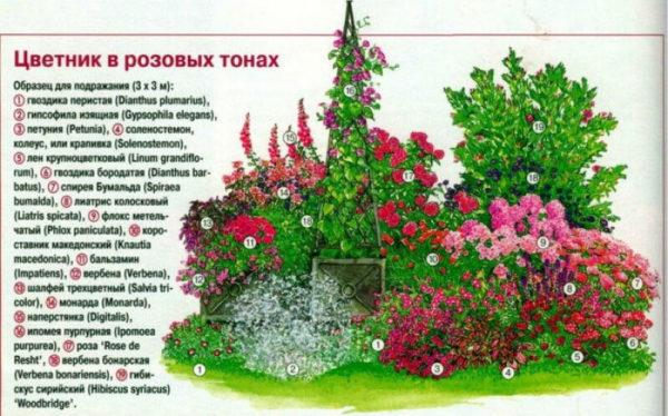 nizkoroslye-cvety-dlja-klumby-kotorye-budut-cvesti-vse-leto-f1800d2