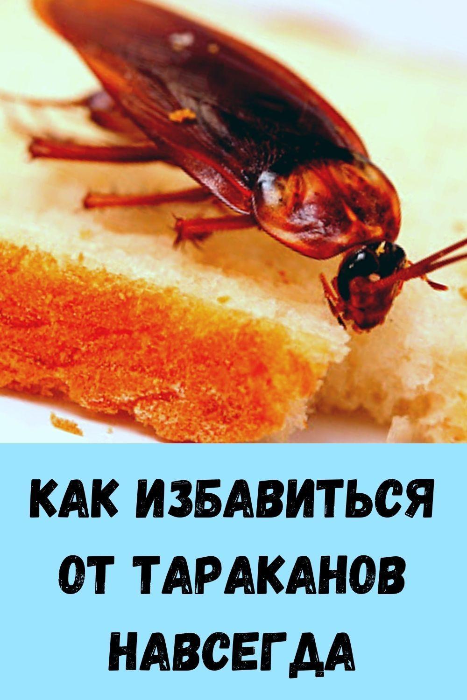 pochemu-travniki-rekomenduyut-vsem-zhevat-sushenuyu-gvozdiku_-6