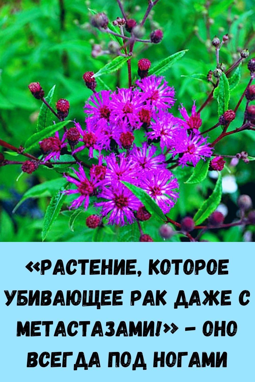 pochemu-travniki-rekomenduyut-vsem-zhevat-sushenuyu-gvozdiku_-8