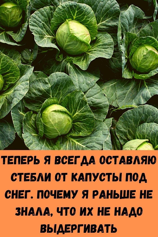 posle-takoy-podkormki-komnatnye-tsvety-rastut-kak-na-drozhzhah-1