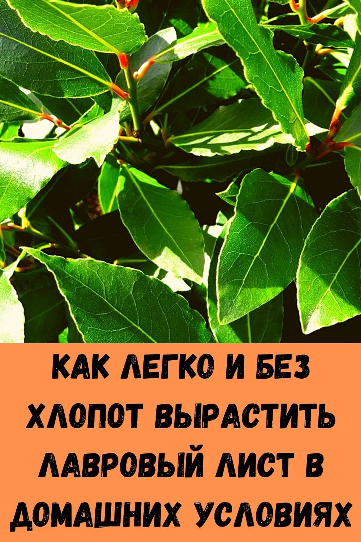 posle-takoy-podkormki-komnatnye-tsvety-rastut-kak-na-drozhzhah-8