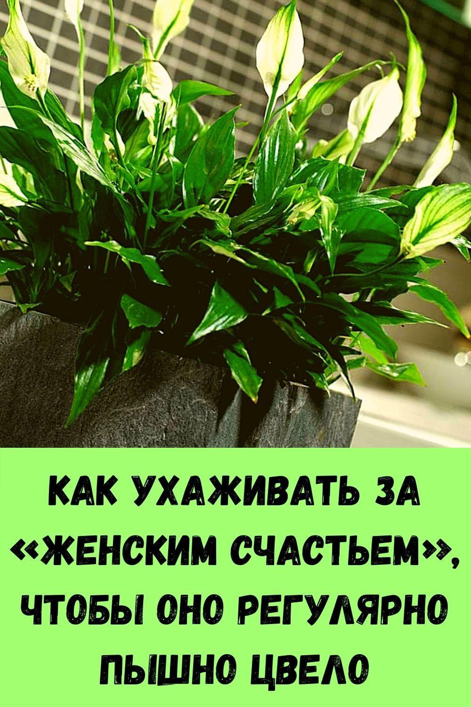 retsept-kabachkov-na-skovorode-dlya-bystrogo-prigotovleniya-11