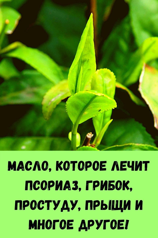 retsept-kabachkov-na-skovorode-dlya-bystrogo-prigotovleniya-16