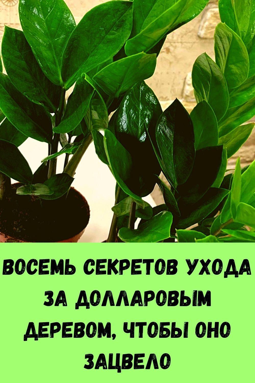 retsept-kabachkov-na-skovorode-dlya-bystrogo-prigotovleniya-17