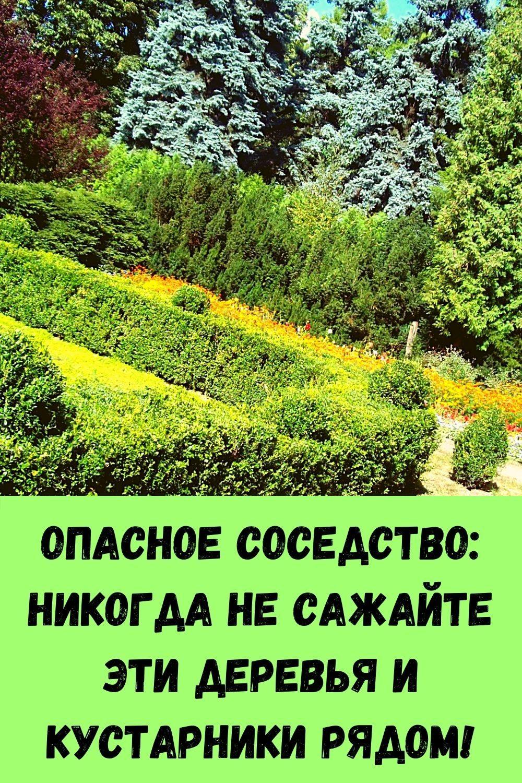 retsept-kabachkov-na-skovorode-dlya-bystrogo-prigotovleniya-3