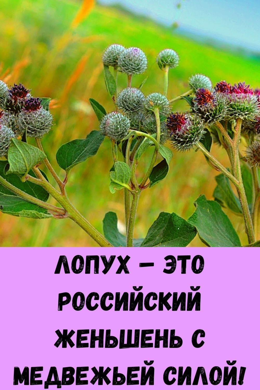 semena-kotorye-ubivayut-rak-uluchshayut-zrenie-i-son-4