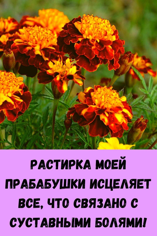 semena-kotorye-ubivayut-rak-uluchshayut-zrenie-i-son-6