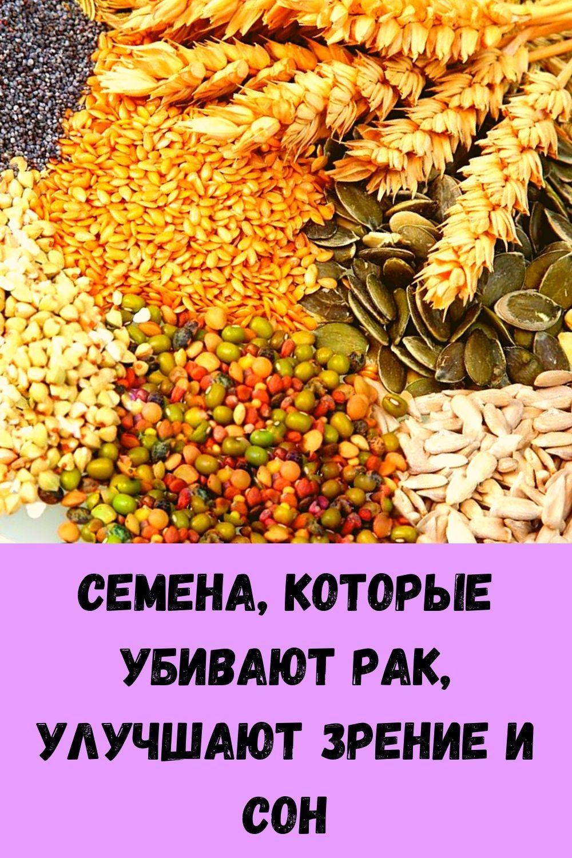 semena-kotorye-ubivayut-rak-uluchshayut-zrenie-i-son-2