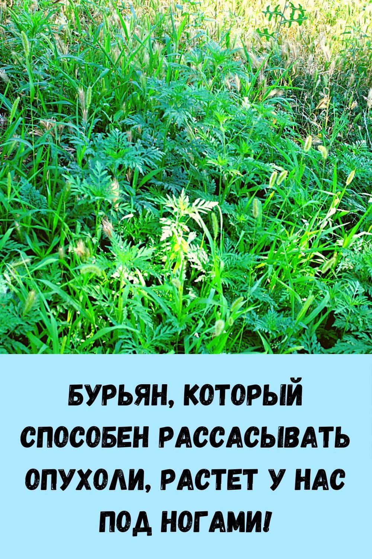 sindrom-venery_-kak-ubrat-zhirovye-podushki-na-bedrah-i-zhivote_-15
