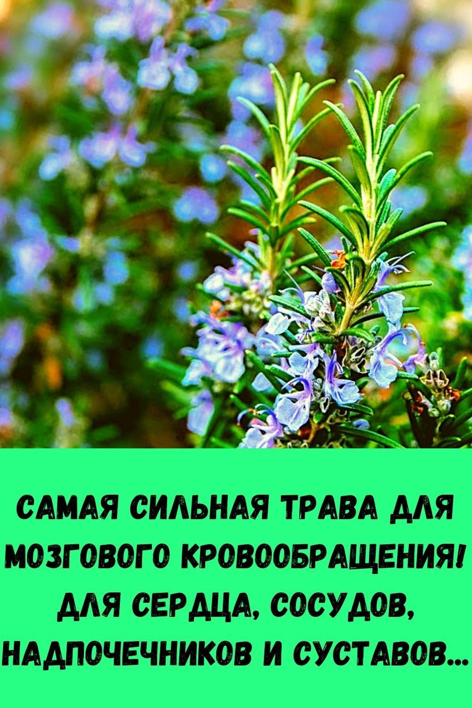 slabye-nogi-slaboe-serdtse-chto-prisedaniya-dayut-serdtsu-14