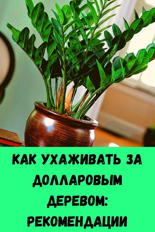 slabye-nogi-slaboe-serdtse-chto-prisedaniya-dayut-serdtsu-15