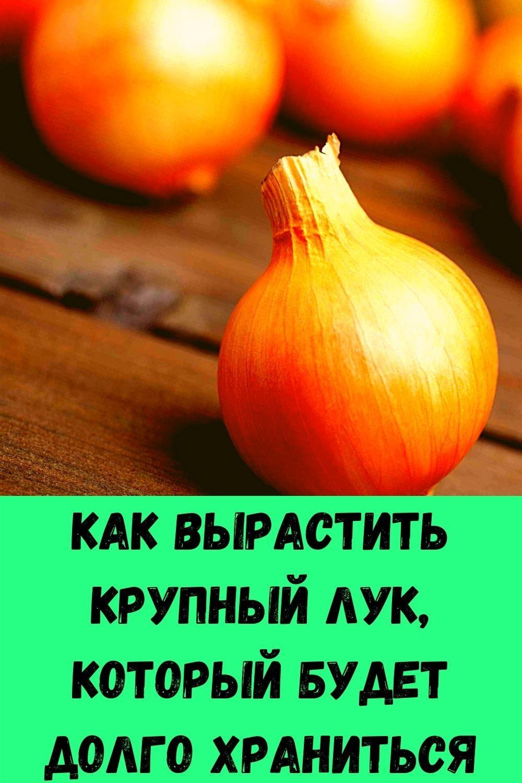 slabye-nogi-slaboe-serdtse-chto-prisedaniya-dayut-serdtsu-8