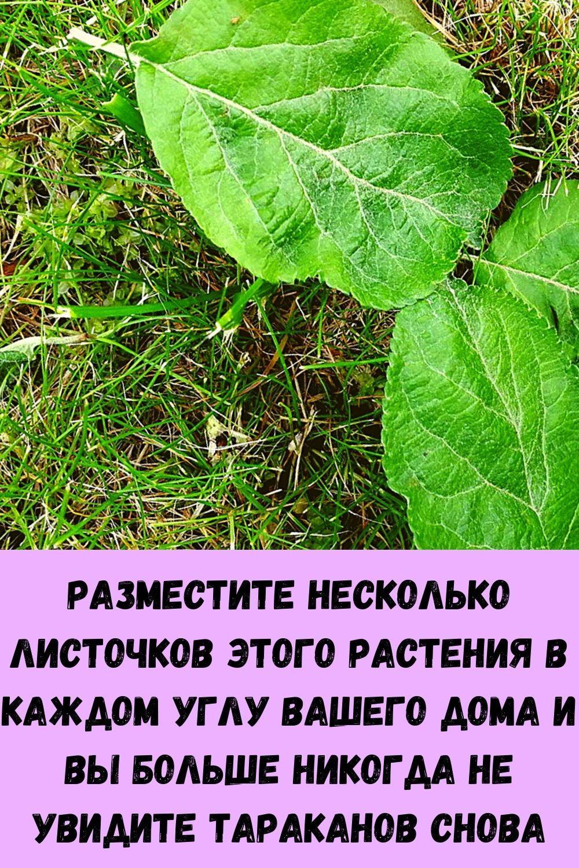 srazhenie-veka-parazity-v-pecheni_-osnovnye-simptomy-1