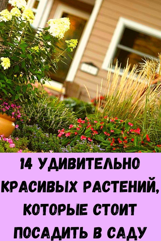 srazhenie-veka-parazity-v-pecheni_-osnovnye-simptomy-7