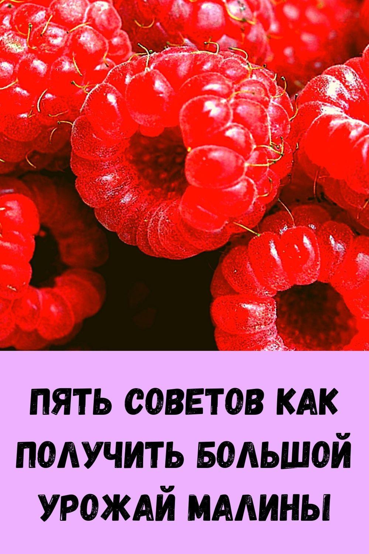 srazhenie-veka-parazity-v-pecheni_-osnovnye-simptomy-9