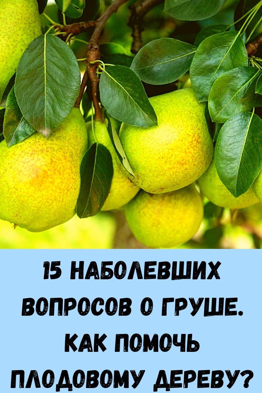 unikalnyy-produkt_-seday-po-lozhke-v-den-zabudesh-dorogu-v-apteku-6