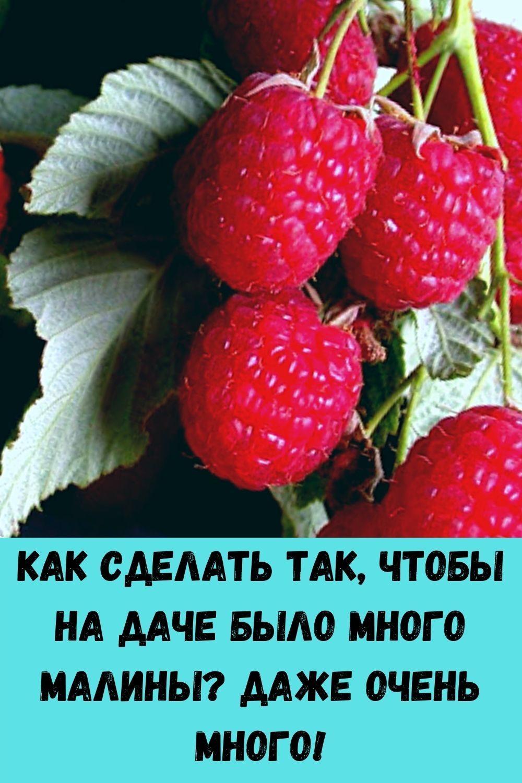 vashi-volosy-budut-tolstymi-krepkimi-i-blestyaschimi-esli-primenyat-eti-5-moschnyh-sredstv-100-uzhe-posle-3-5-primeneniy-2-2