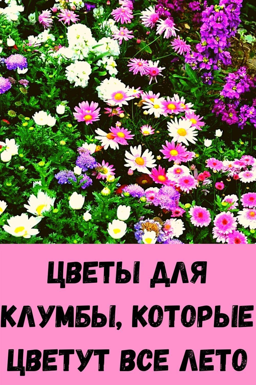 vkusnee-ogurtsov-vy-ne-eli-zimoy-skazhite-mne-spasibo-6