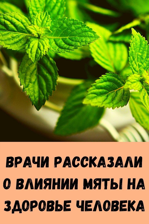 vrachi-rasskazali-o-vliyanii-myaty-na-zdorove-cheloveka-3