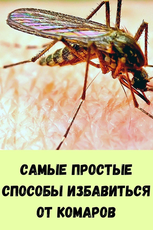 vy-budete-udivleny-tem-chto-vyydet-iz-vashego-kishechnika-eshte-etu-pischu-na-uzhin-3-dnya-2-2