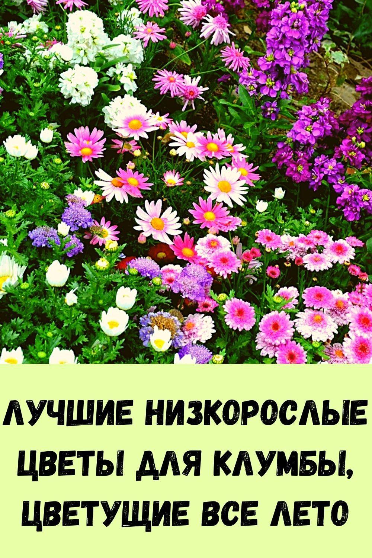 vy-budete-udivleny-tem-chto-vyydet-iz-vashego-kishechnika-eshte-etu-pischu-na-uzhin-3-dnya-5