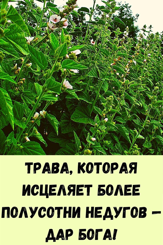 vyklyuchatel-zhirovyh-otlozheniy-7
