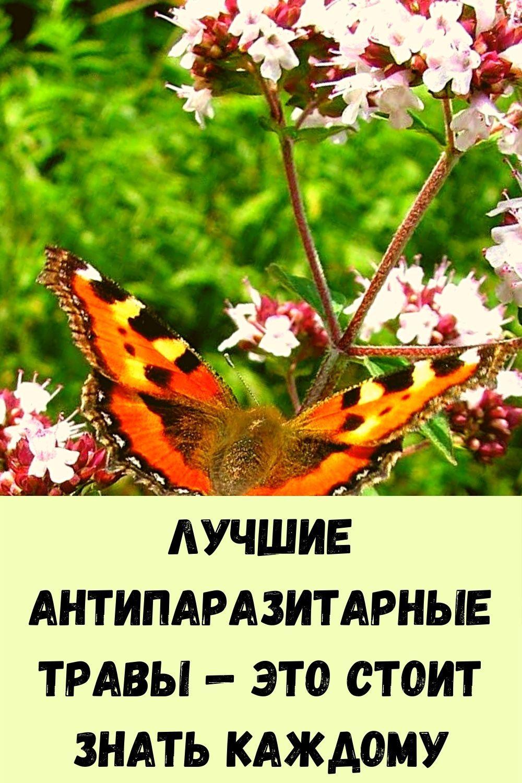 vyklyuchatel-zhirovyh-otlozheniy-9