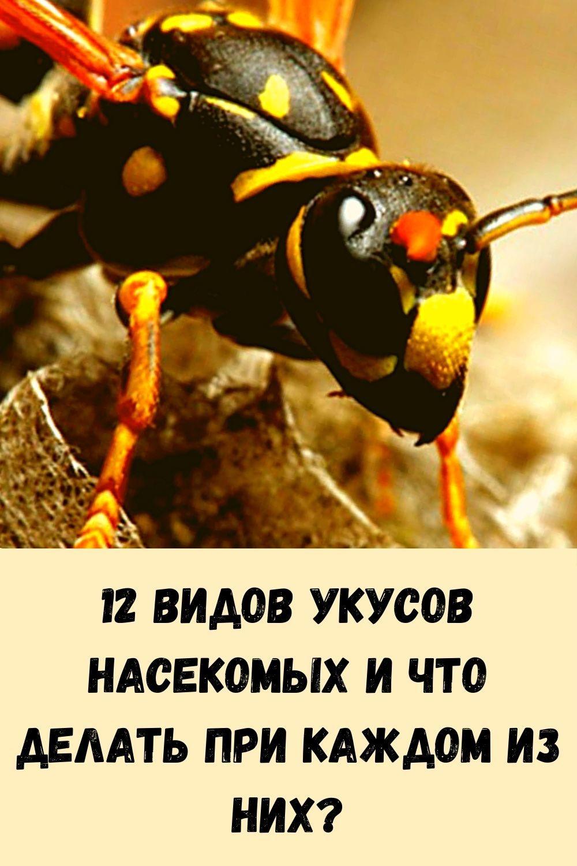 yaponskaya-mudrost_-frazy-smysl-kotoryh-stanovitsya-ponyaten-tolko-s-vozrastom-1